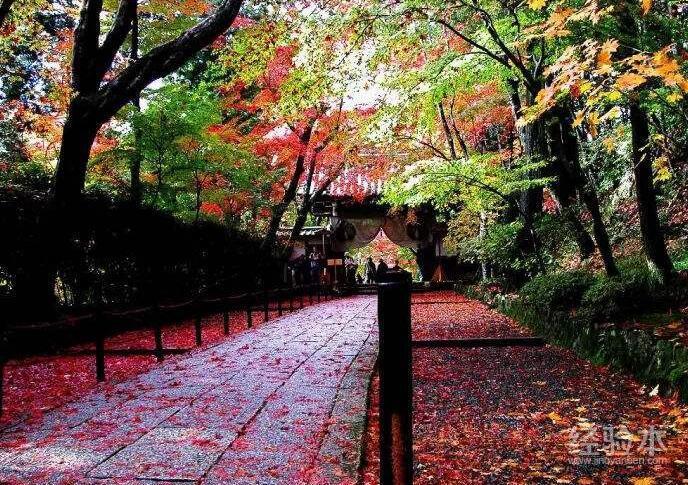 11月去日本冷吗