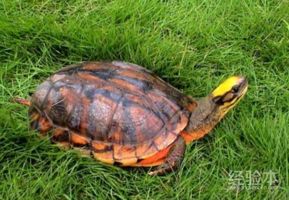 乌龟感冒了怎么办最快