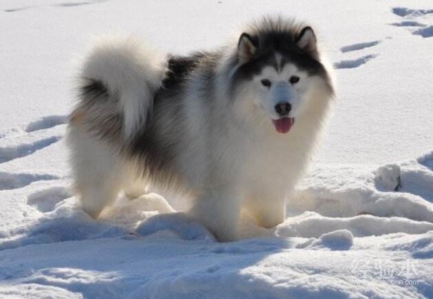 阿拉斯加冬天穿衣服嗎