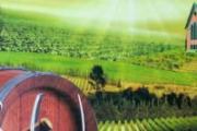 澳大利亚南澳酒庄探秘之旅